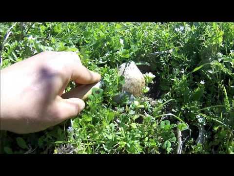 Trattamento di un fungo di gambe nutrendosi