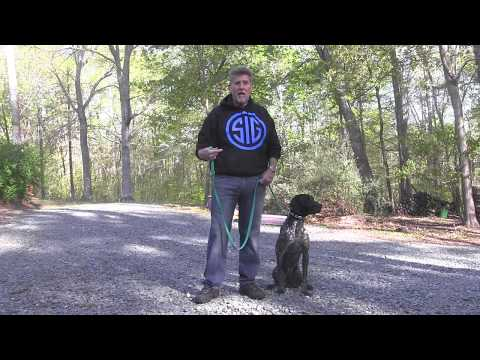 German Shorthaired Pointer Puppy Training Charlotte NC | Wrigley