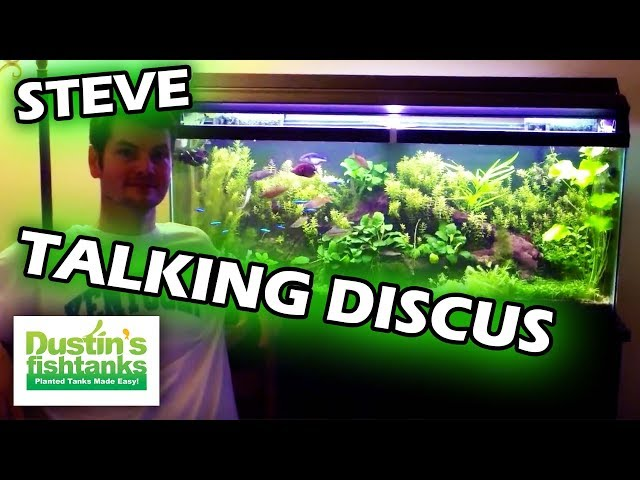 How To Keep Discus Fish: Species Sunday: Steve's Thoughts on Discus
