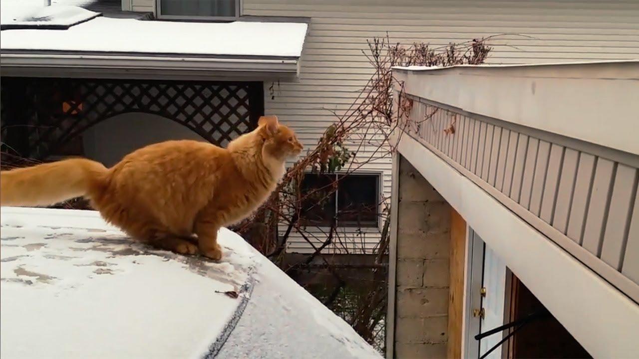 Опасный прыжок кота фото