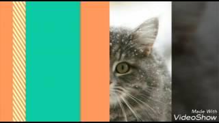 Слайд шоу с котиками!    Клуб любителей Кошек 