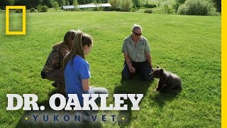 A Bear-rel of Laughs | Dr. Oakley, Yukon Vet