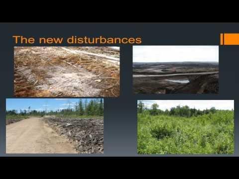 El papel de la selección de especies vegetales en la reconstrucción de ecosistemas forestales resistentes después de disturbios graves