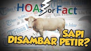 Hoax or Fact: Belasan Ekor Sapi yang Tersambar Petir di Kupang Dagingnya akan Dijual ke Pasar