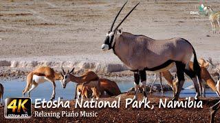 4K African Wildlife Documentary Film – Etosha National Park Namibia Africa – Part One