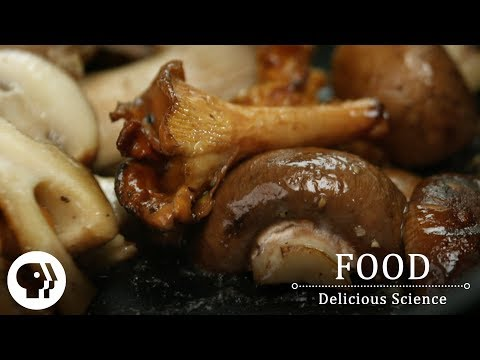 FOOD – DELICIOUS SCIENCE   A Mushroom Vitamin D Boost   PBS Food
