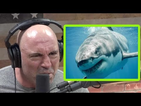 Joe Rogan: Sharks Are Like Werewolves…