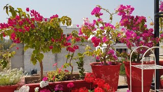 Best Permanent Summer Flowers With Names And Care||Best Flowering Plants For Summer || Fun Gardening