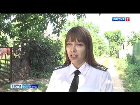 В Волгограде специалистами Управления Россельхознадзора проводится мониторинг насаждений плодовых культур на наличие бактериального ожога