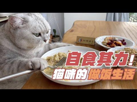 喵喵主廚今天要煮的是什麼料理呢<3