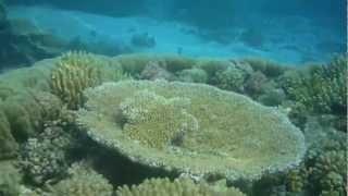 Beautifull Coral Reef - Foa Island Ha,apai Tonga