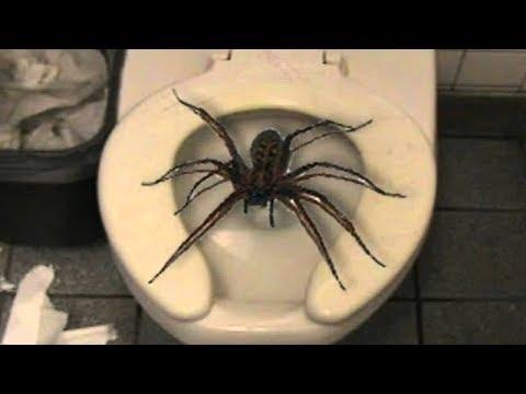 Top 10 Insectos Y Arañas Que No Creerás Que Existen
