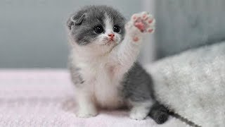 「猫かわいい」 すごくかわいい子猫 - 最も面白い猫の映画 #252