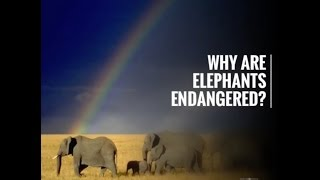 Why are Elephants Endangered?