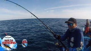 Tarikkan Mantap Ikan Barakuda Sampai Kebawa ke Belakang Perahu - Mata Pancing (16/12)