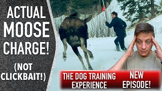 Coaching My Personal Canine: An Sincere Have a look at The place We're Now.