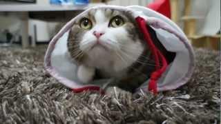 Самый смешной кот.-.mp4