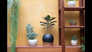 Best Plant Shops in Williamsburg, Brooklyn — Plant One On Me — Ep 037