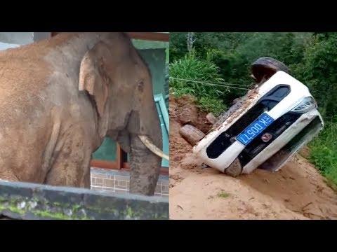 فيل يحطم 5 سيارات في الصين