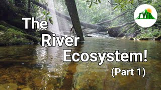 Ecosystems Episode 4: The River Ecosystem! (1/2)