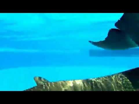 Dolphin swim, Selwo Marina Delfinarium, Málaga, Spain, Benalmádena