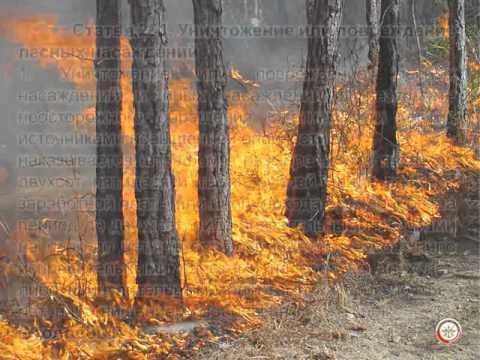 Ответственность за нарушение законодательства об охране природы.