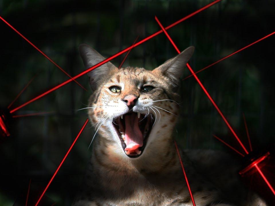 Big Cats Vs Lasers