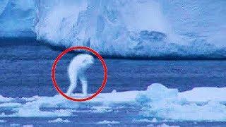 TOP 5 – Tajemná stvoření zachycená na kameru!