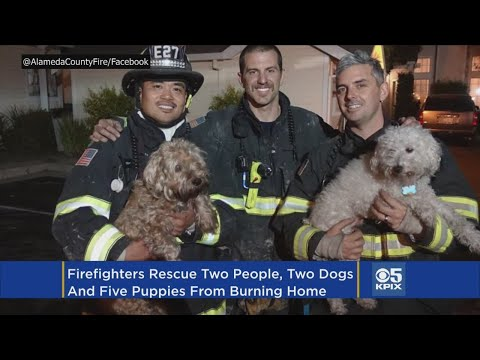 5 Puppies Among 7 Dogs, 2 Adults Rescued From Newark House Fire