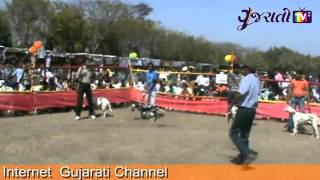 preview picture of video 'Rajkot Dog Lovers Club Organised A Dog Show | Rajkot'