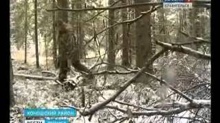 В Коношском районе небывалое нашествие волков