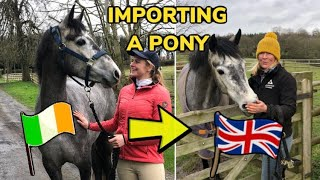 BUYING A PONY UNSEEN FROM IRELAND ~ Meeting her for the first time