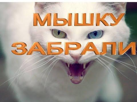 Приколы с котами 2016 - ЗАБРАЛИ МЫШЬ КОТ В ШОКЕ