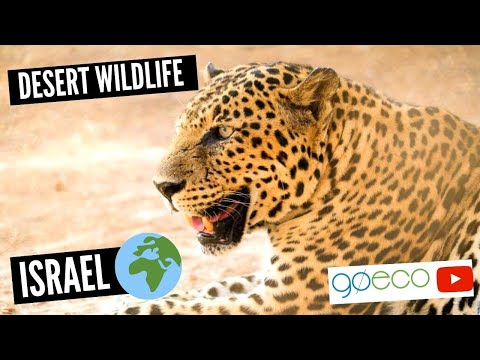 Volunteer with Desert Wildlife in Israel