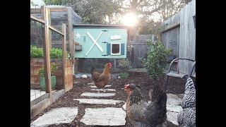 Backyard Chicken Coop And Run Tour