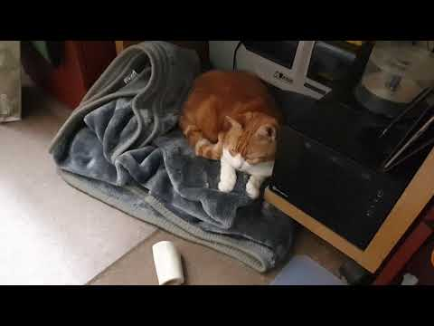 Rude Cat Steals Little Dogs Bed