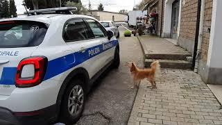 cagnolino-abbandonato-chiede-aiuto-alla-polizia-municipale