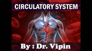 What is Circulatory System & How it Works ?