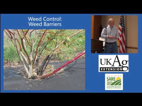 Strategies for Organic Weed Control in Blueberry, Part 3: Weed Barriers