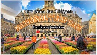 Amsterdam   National Tulip Day 2020