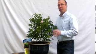 Fertilizing your Citrus Tree