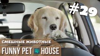 СМЕШНЫЕ ЖИВОТНЫЕ И ПИТОМЦЫ #29 ФЕВРАЛЬ 2019 [Funny Pet House] Смешные животные