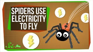 Turns Out, Spiders Use Electricity to Fly - Video Youtube
