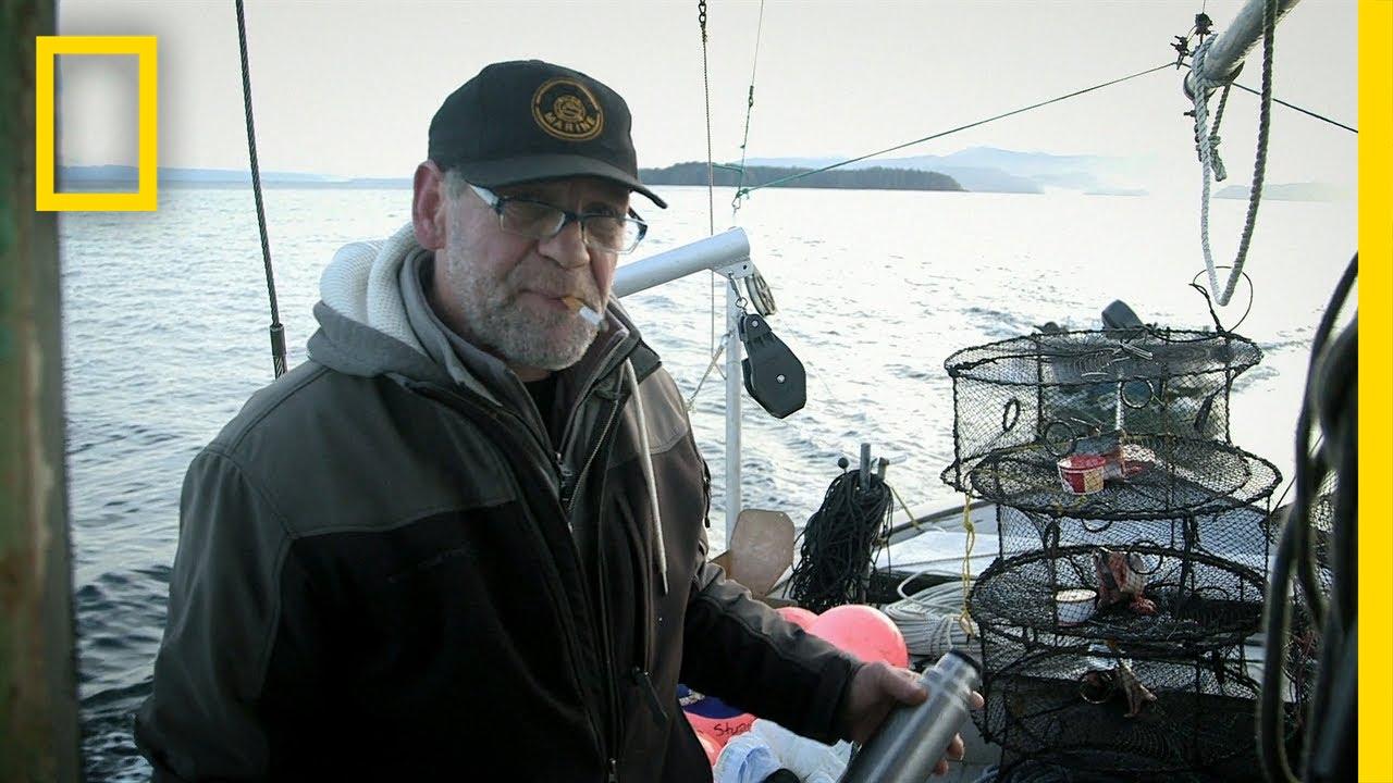 Packing the Shrimp Pots   Port Protection thumbnail