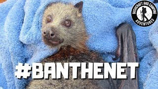 Flying-fox brutally injured by fruit-tree netting: A horrible day - #BANTHENET
