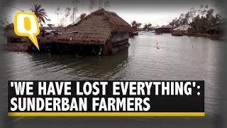 Crops Damaged, Land Infertile & Livelihoods Lost: Sundarban Farmers Worst-Hit By Amphan | The Quint