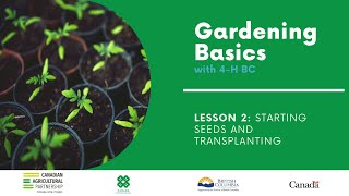 Gardening Basics with 4-H BC: Lesson 2 - Starting Seeds & Transplanting