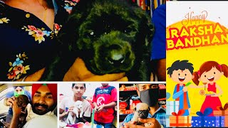 Importance of Puppy in Our Lives | What is The Best Dog Breeds Gift for Sister in Rakhi | BholaShola