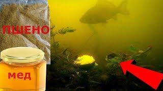 Варим прикормку для рыбалки из пшена с медом