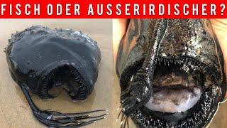 Alien Artige Meereskreatur gefunden -  Forscher sind schockiert